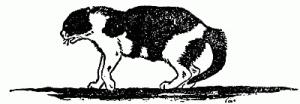 El gato que caminaba solo 3